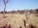 Elephant Gun = 1, Tree = 0