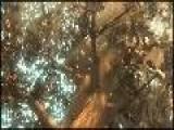 Buz Devri Izle F&#305 Nd&#305 K K&#305 Ran Cizgifilmci.com