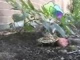 Davidsfarm - 0315 - GyNK4CkeGHk - HQ - Kittens Playing In Garden
