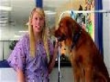 Eau Claire Dog Groomers Tip To Grooming Your Golden Retriever