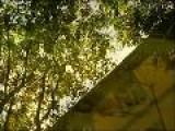 Four Seasons 4 Jahreszeiten Summer Antonio Vivaldi
