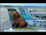 Frontier Airlines Wins Gold Effie