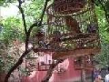 Jing Shan Birds
