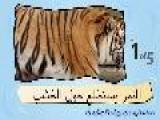 Learn Arabic-Learn With Arabic Big Cats Video