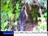 Neelam Valley -Muzaffarabad -Azad Kashmir