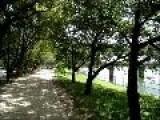 River Running Route Hiroshima City