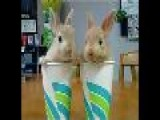 Talking Bunnies Blind Date