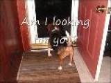 Zoe The Beagle