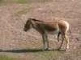Donkey Aerobics