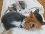 Secret Kitten