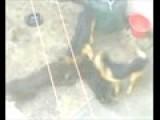 Pelea De Perros 2