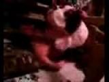 Doggy Anal Rape