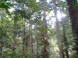 Hiking Through The Amazon