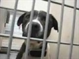 OKC Animal Shelter: Handsome Boy
