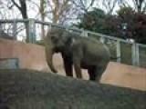 Zoo In Japan