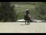 Pre Andalusian Black 2000mare Out Of