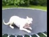 Sandee Being Silly On The Trampoline!
