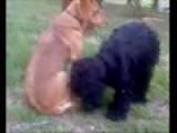 My Lesbian Dogs