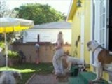 Spraying Dogs With Waterhose To