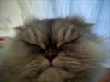 POOT POOT CAT