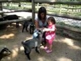 Grant&#39 S Farm: Feeding The Goats