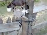Donkey Strap-On