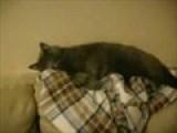 Katie Catalystic™&#39 S Video Of Her Cat
