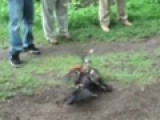 Play PELEAS DE GALLOS EN EL CERRO DE ZINAPARO! Video