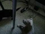Puppy Fight Part 2