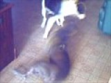 Pandora And Dusti Playing
