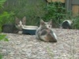 The Kittens Outside My Door