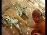 Yvonne Tickles A Tiger!
