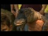 Alligator Found, Corraled In Bethlehem's Illicks Mill Park