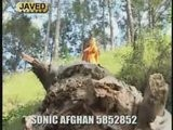 Nazia Iqbal Afghan Song I LOVO YOU Jan