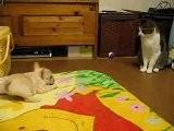 Cucciolo Di Bulldog Contro Gatto