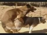 Desert Dogg Sexs