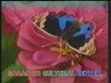 Nazia Iqbal-Pashto Mosiqui-Tang Takor-Afghan Music-Pasarlay