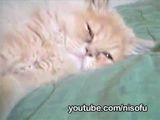 Ultra Kawaii - Zzzz...Sleeping Pets - Cute Puppies, Funny Cats