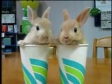 Talking Bunny Blind Date