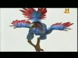 Dinosaurios: Origen De Las Aves