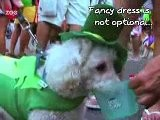 Rio Dog Carnival