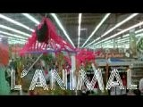 L Animal Jean-Paul Belmondo Raquel Welch Bande Annonce