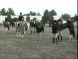 APHA Gelding, Alotta Chock In 2 Year Old Hunter Under Saddle Class