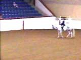 APHA 2008 World Show LilPeck Classic Amateur Hunt Seat Equitation