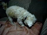 My Sweet Loly Acasa2007