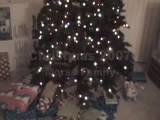 Morse Family Christmas 2007