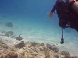 Salina Scubadiving On Bonaire
