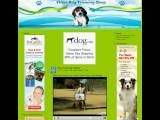 Video Dog Training