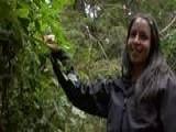 Learn Hiking The Rainforest Trail In Tofino - British Columbia, Canada