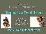Anchorage Pet Meds- Healing Your Pet At Home